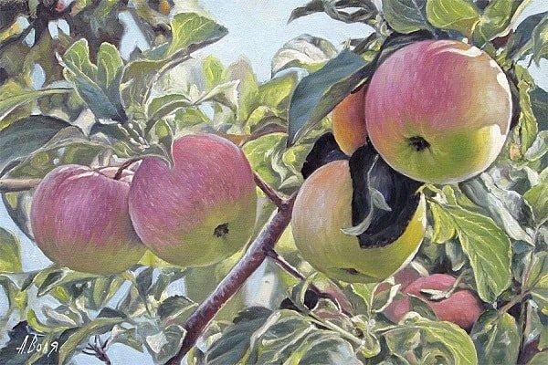Яблочки на ней висят наливные краткое содержание сказки Хаврошечка с картинками много красочных ярких картинок и рисунков для ребят маленьких и больших