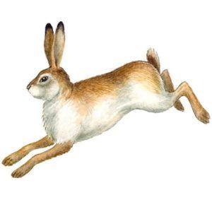 Почему у зайца хвост короткий, аудиосказка аудиосказка фирма Мелодия сказки из нашего детства старая поцарапанная старая виниловая пластинка крутится вертится на проигрывателе и иголкой снимается звук с треском