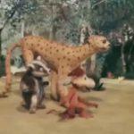 КОАПП. Дом для барсука, мультфильм (1987)