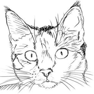 Кошачьи уши сказка Бажова уральские сказы в книге с рисунком читаем онлайн