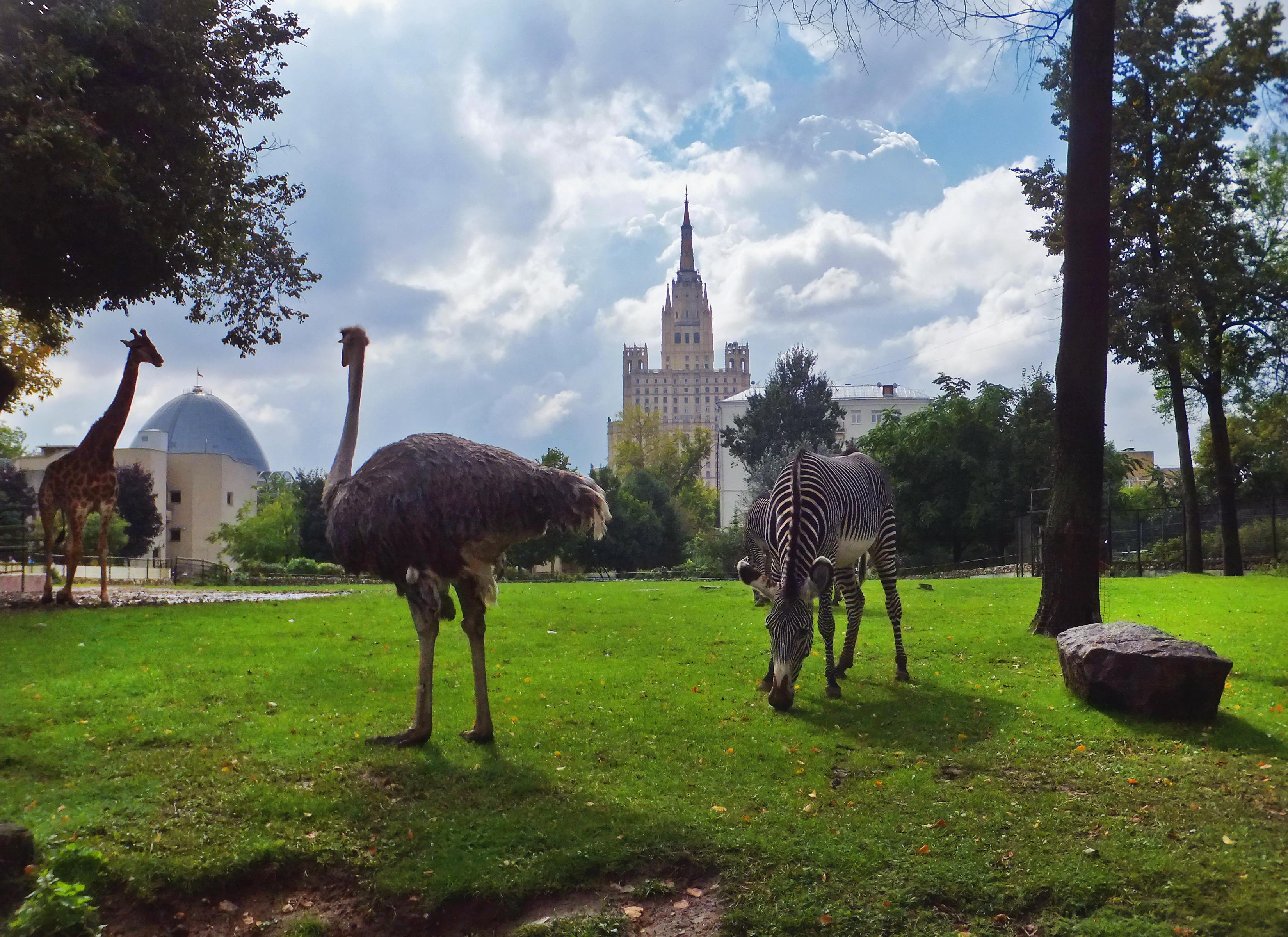 Московский Зоопарк приглашает родителей с детьми