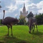 ТОП-5 лучших мест для отдыха с детьми в Москве