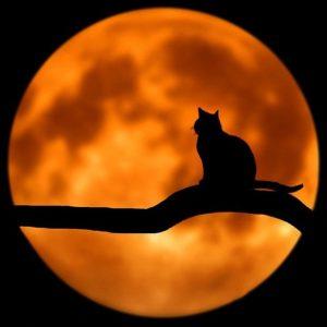 Луна сказка братьев Гримм картинка