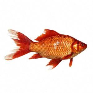 Морская рыбка сказка братьев Гримм читать книжку