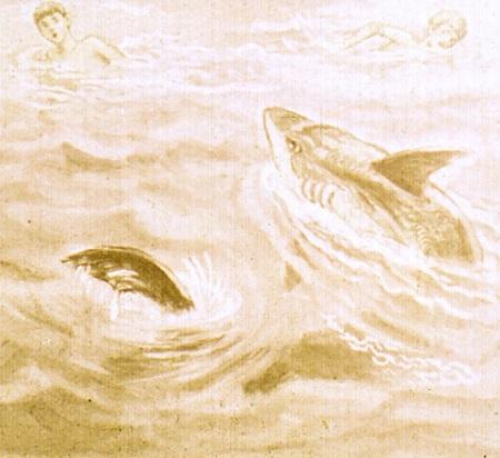 Акула рассказ Лев Толстой иллюстрация